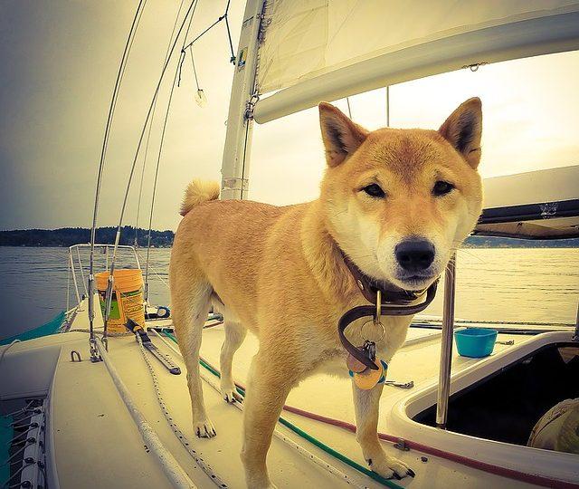 Consejos para navegar con mascotas: cómo disfrutar un paseo seguro con perros o gatos a bordo